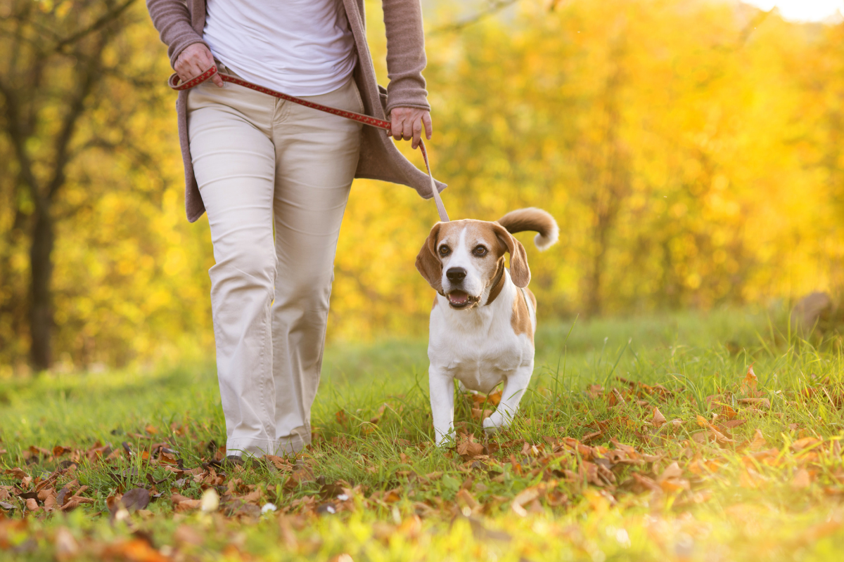 Dog friendly walking routes Colchester